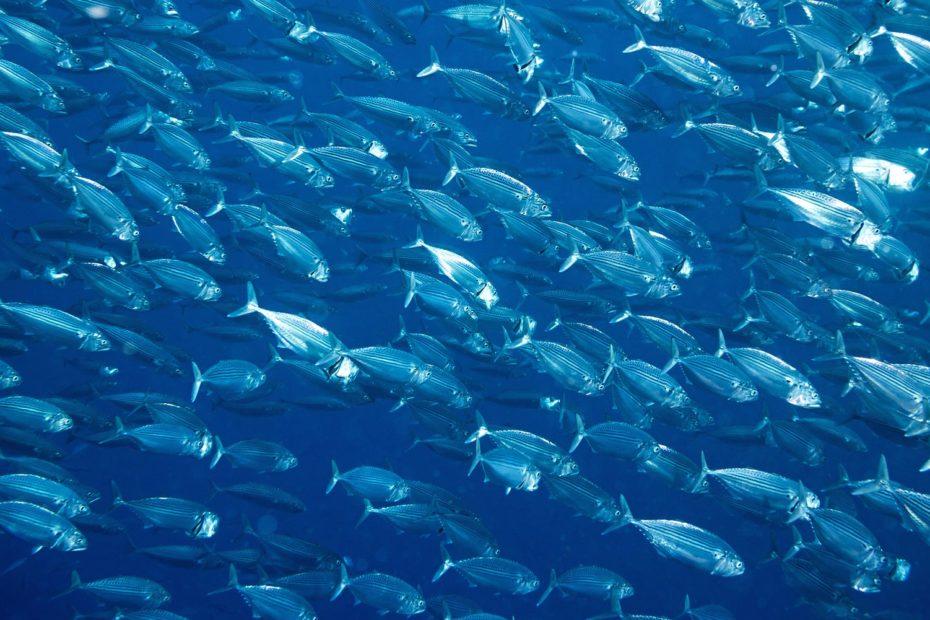 ocean-running-out-of-oxygen