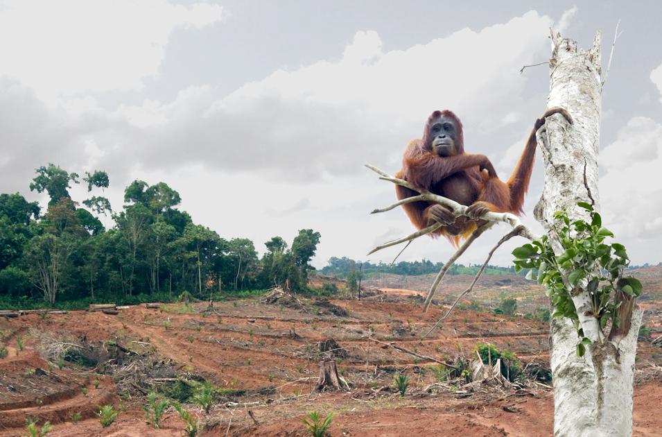 biodiversity-destruction