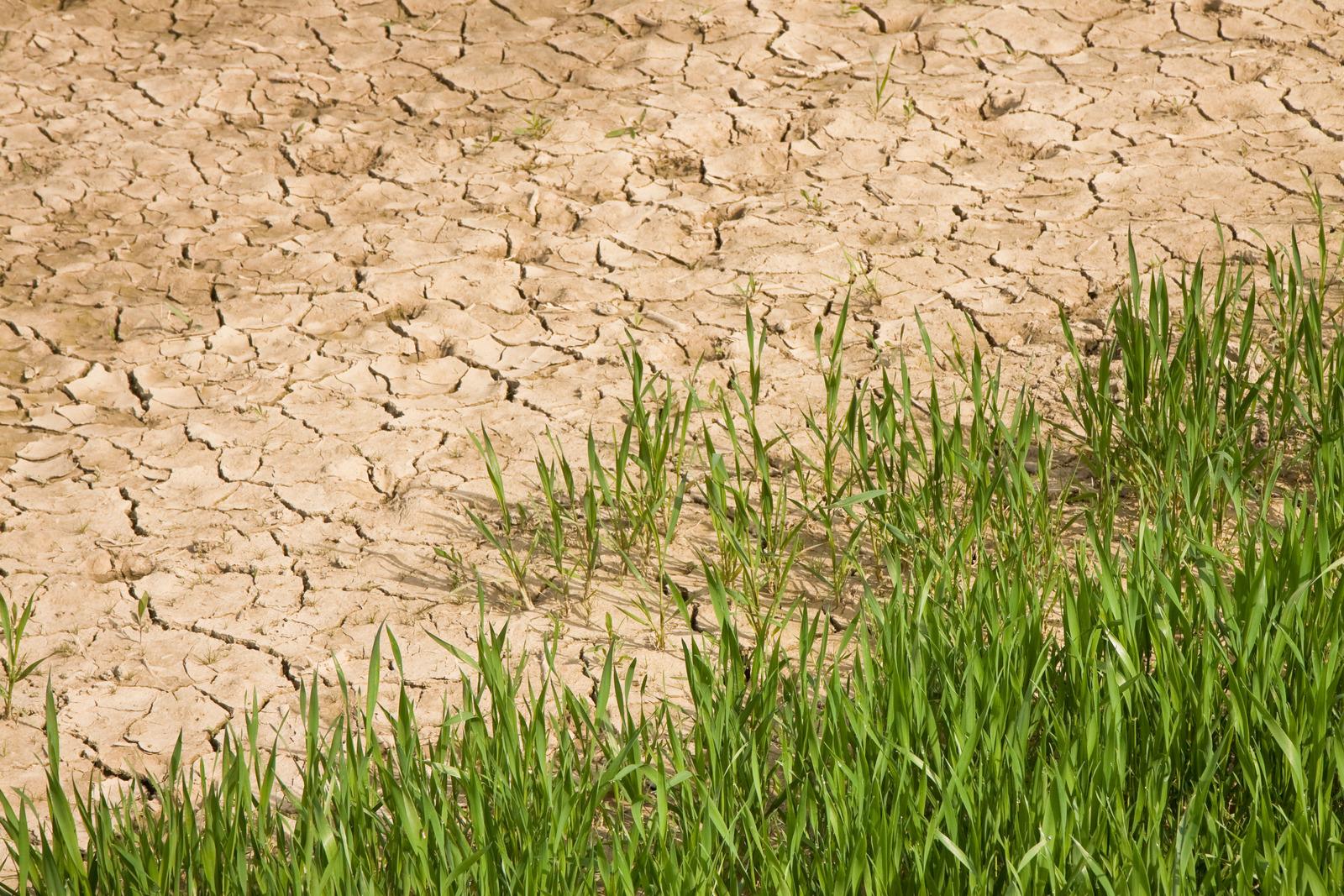 Prepare for global food emergency